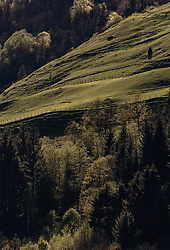 THEMENBILD - Bergwiesen und Mischwald im Sonnenlicht, aufgenommen am 02. Mai 2019, Kaprun, Österreich // Mountain meadows and mixed forest in sunlight on 2019/05/02, Kaprun, Austria. EXPA Pictures © 2019, PhotoCredit: EXPA/ Stefanie Oberhauser