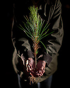 OLIVER, GA - DEC., 15, 2016: Lynda Beam holds a slash pine seedling on her TooHolly farm, Thursday, December 15, 2016, in Oliver, Ga. (Photo by Stephen B. Morton for Georgia Forestry Magazine)