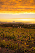 Dubral Vineyard, Rattlesnake AVA, Washington