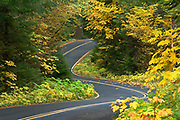 Aufderheide Memorial Drive, part of the West Cascades National Scenic Byway, with Bigleaf Maple and Vine Maple trees in Fall color; Willamette National Forest, Cascade Mountains, Oregon.
