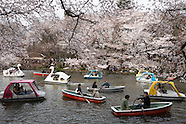20120407 Japan, Cherry Blossom viewing