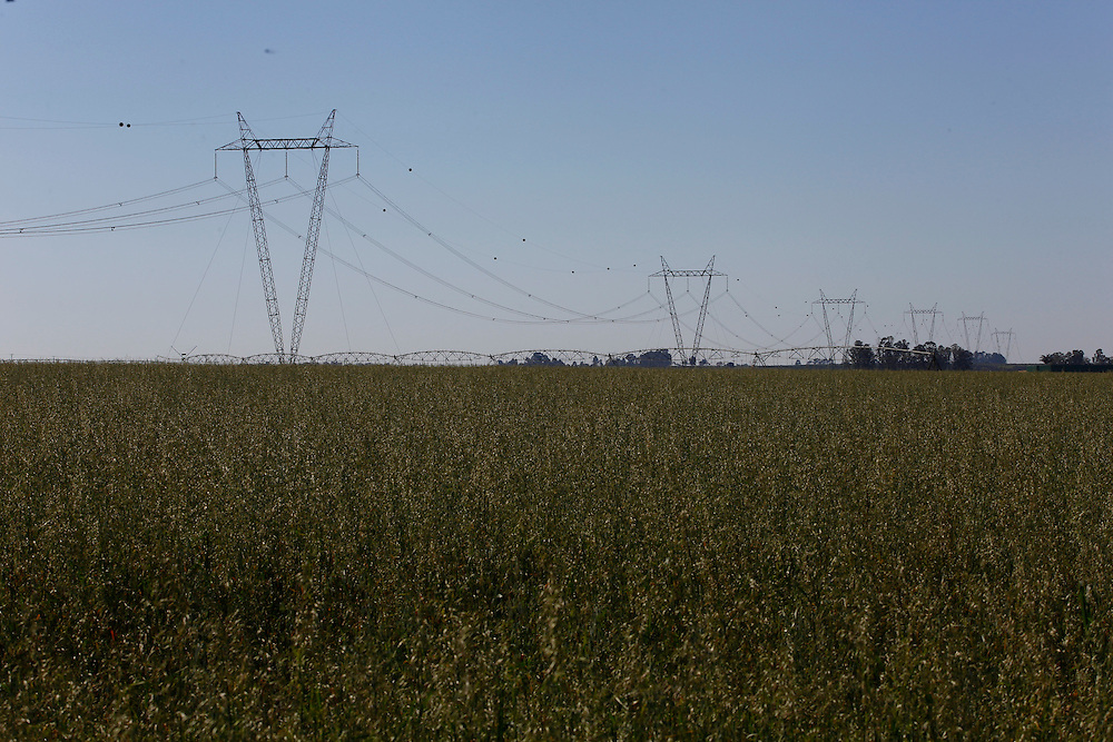 Sao Gotardo_MG, 26 de maio de 2015<br /> <br /> Fotos dos produtores de aveia com linhas de transmissao de energia.<br /> <br /> Foto: MARCUS DESIMONI / NITRO