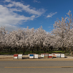Blossoming trees and boxes of bees