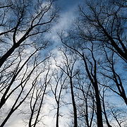 Bare trees silhouetted against the sky.