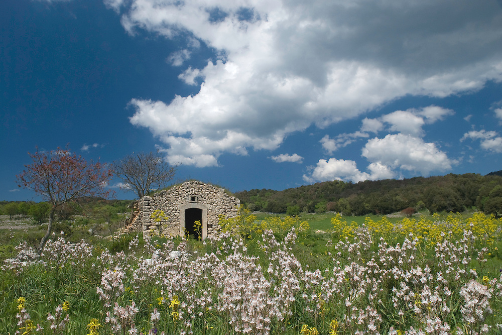 Apulia; cultivated landscape; Gargano National Park; Gargano Peninsula; Italy