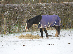 © Licensed to London News Pictures. 05/12/2012..Yorkshire and Cleveland, England..A horse in a field in North Yorkshire eats his breakfast as overnight snow fall brings the first signs of the wintery weather that is forecast for the rest of this week to the region...Photo credit : Ian Forsyth/LNP