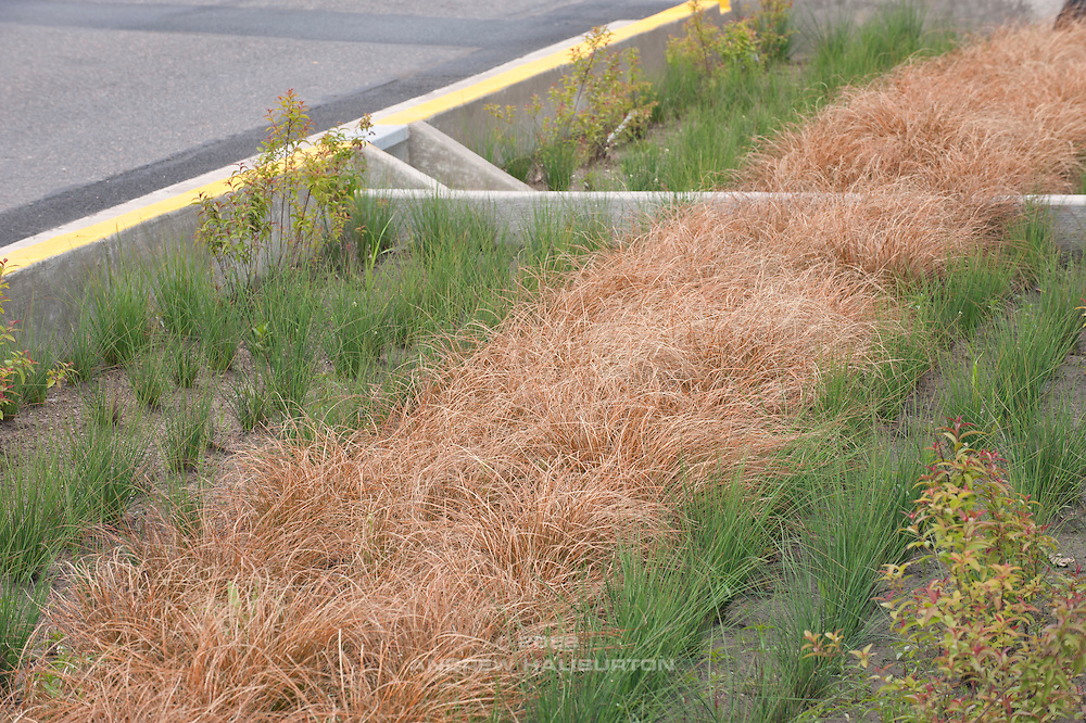 A stormwater curb extension retrofit to an existing street.  Stormwater management facilities like this one are are also known as Green Street treatments.  NW 21st Avenue and Raleigh Street, Portland, Oregon.