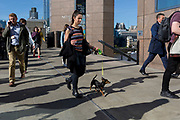 During the evening rush-hour, a lady walks southwards over London Bridge with her pet dog on a lead, on 14th May, in London, England.