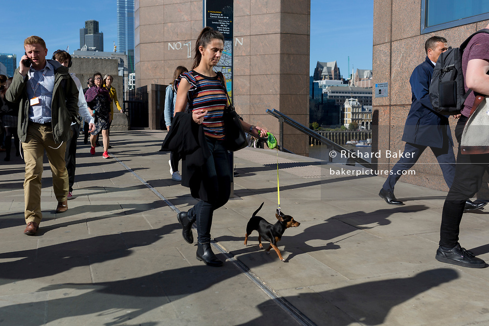 During the evening rush-hour, a lady walks southwards over London Bridge with her pet dog on a lead, on 14th May, in London, England. (Photo by Richard Baker / In Pictures via Getty Images)