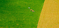 Aerial view of three Horses