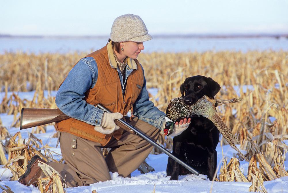 36-135. A female hunter takes a pheasant from a black Labrador retriever during a winter hunt in southeast Idaho.
