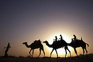 Dromedary camel caravan ride for tourists, Camelus dromedarius, Dubai Desert Conservation Reserve, Dubai