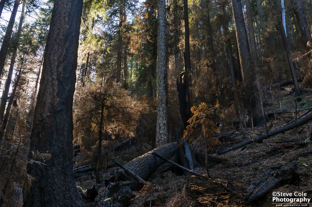 Snog Timber Sale Unit 2 (Devils Canyon Section of 2017 Umpqua North Complex Fire) - Dog Prairie Creek