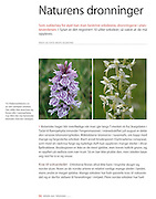 About wild orchids and other wild flowers in the mountains of Sylan. The 2010 yearbook, the Norwegian Trekking Organization (DNT).