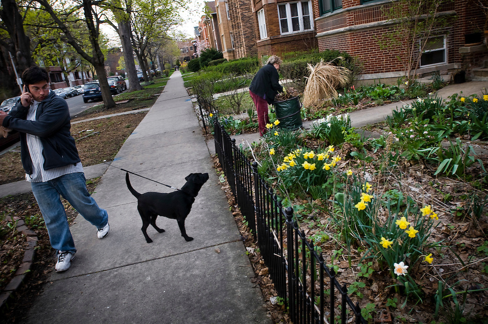 A man walking his dog past  Judith Cooper's  garden outside her home in Rogers Park, Chicago.<br /> <br /> Rogers Park is one of Chicago's most ethnically diverse neighborhoods.<br /> <br /> Green Chicago.Photographer: Chris Maluszynski /MOMENT<br /> Green Chicago.Photographer: Chris Maluszynski /MOMENT