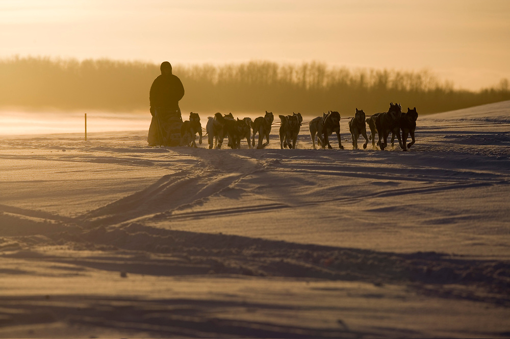 USA, Alaska, Anvik, Musher and dog team race along snow-covered Yukon River checkpoint during 2005 Iditarod sled dog race at sunrise on winter morning.