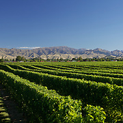 The view of the vineyards in the Marlborough Wine Region from the tower at Highfield Estate WInery,  Brookby Road, Blenheim, Marlborough. New Zealand..Established in 1989, Highfield is a boutique Marlborough winery  owned by Shin Yokoi and Tom Tenuwera. . Highfield is surrounded by a beautiful five acre pinot noir block, situated on the Brookby Ridge and signposted by the iconic tower...The Marlborough wine region is New Zealand's largest wine producer. The Marlborough wine region has earned a global reputation for viticultural excellence since the 1970s. It has an enviable international reputation for producing the best Sauvignon Blanc in the world. It also makes very good Chardonnay and Riesling and is fast developing a reputation for high quality Pinot Noir. Of the region's ten thousand hectares of grapes (almost half the national crop) one third are planted in Sauvignon Blanc. Marlborough, New Zealand, 10th February 2011. Photo Tim Clayton