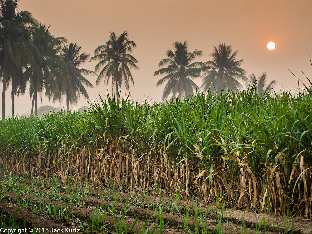 09 FEBRUARY 2015 - THA MAI, KANCHANABURI, THAILAND: Sunrise in a sugarcane field in Kanchanaburi, Thailand. Thailand is the world's second leading sugar exporter after Brazil. The 2015 sugarcane harvest in Thailand is expected to fall about 5% compared to the 2014 harvest because of a continuing drought in Southeast Asia. Brazilian production is also expected to fall this year because of ongoing drought in Brazil. Australia, the number 3 sugar exporter, is also expected to see a smaller harvest this year because of continuing draught in Australia.   PHOTO BY JACK KURTZ
