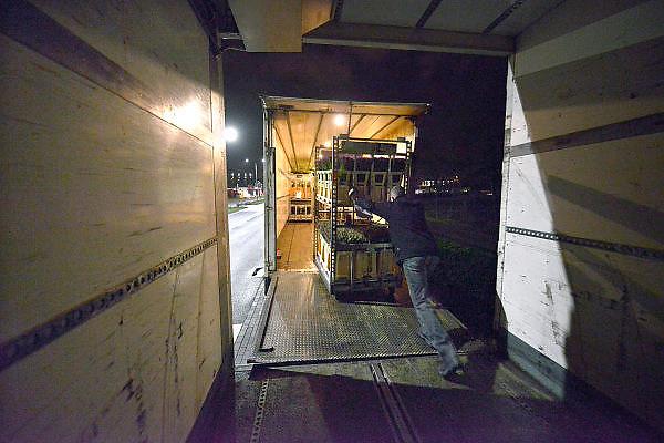 Nederland, Venlo, 27-1-2015Extra grote transporten met bloemen mogen niet de grens met Duitsland passeren. Om toch te kunnen leveren op de veiling 2 km over de grens moet de chauffeur zijn wagen aan de kant zetten en in twee keer de lading over de grens brengen.FOTO: FLIP FRANSSEN/ HOLLANDSE HOOGTE