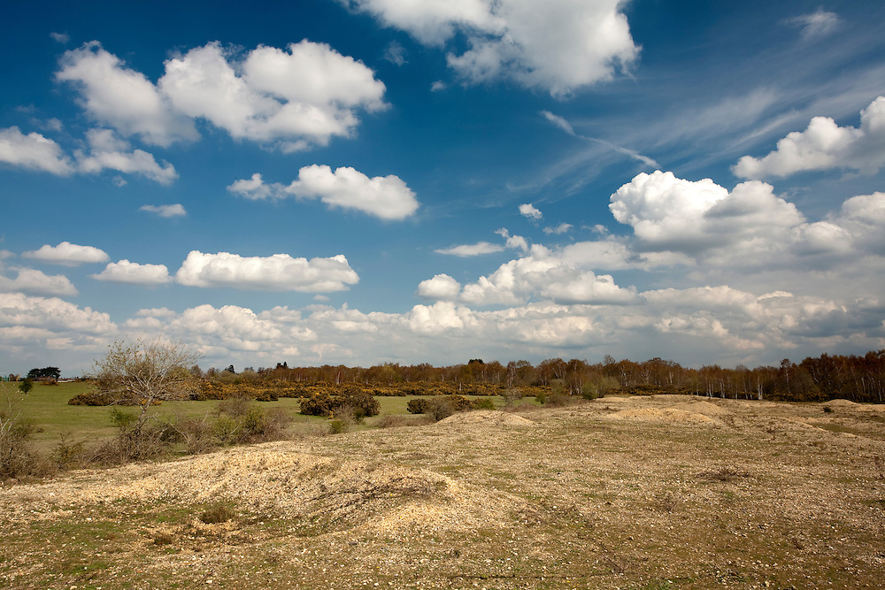 Spring on Greenham Common, near Newbury, Berkshire, Uk