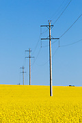 Power line transmission poles in field of flowering canola crop in rural Collingullie, country New South Wales, Australia