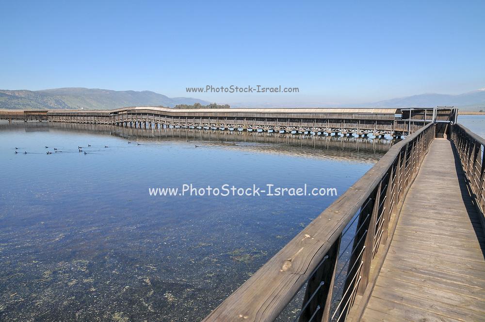 Israel, Hula Valley, Agmon lake winter, March