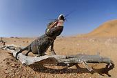 Namib Desert | Wüste