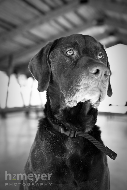 Pointer mix.  Owner Matthew Cenal , Pet Portrait Photography