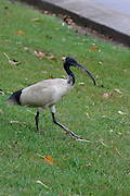 City Centre, Hyde Park. Ibis.