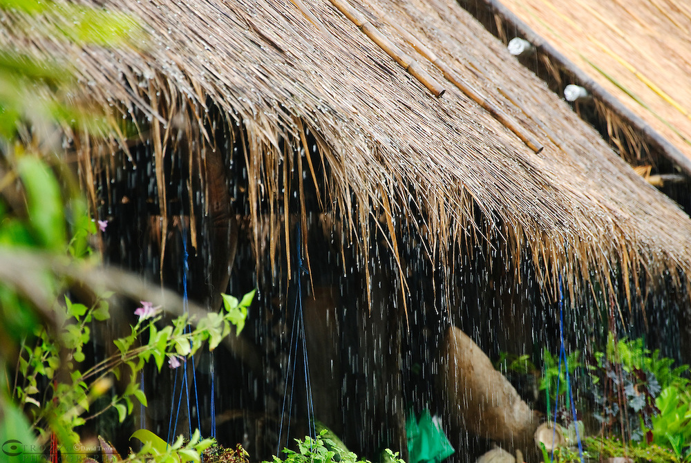 Rain water drips from thatched grass roof