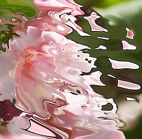 abstract pink fluid liquid and bright shape in acquerello texture on blured green background
