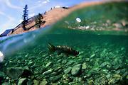 Trout fishing, Idaho