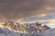 An eagle (Aquila chrysaetos) circles over the peaks of Piz Arblatsch, Piz Forbesch and Piz Platta in the last sunlight of the day, Parc Ela, Grisons, Switzerland