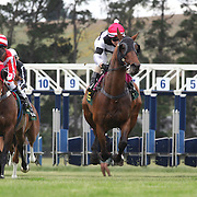 Horses and jockey's  emerge from the starting gate during a day at the Races at the Cromwell Race meeting, Cromwell, Central Otago, New Zealand. 27th November 2011. Photo Tim Clayton
