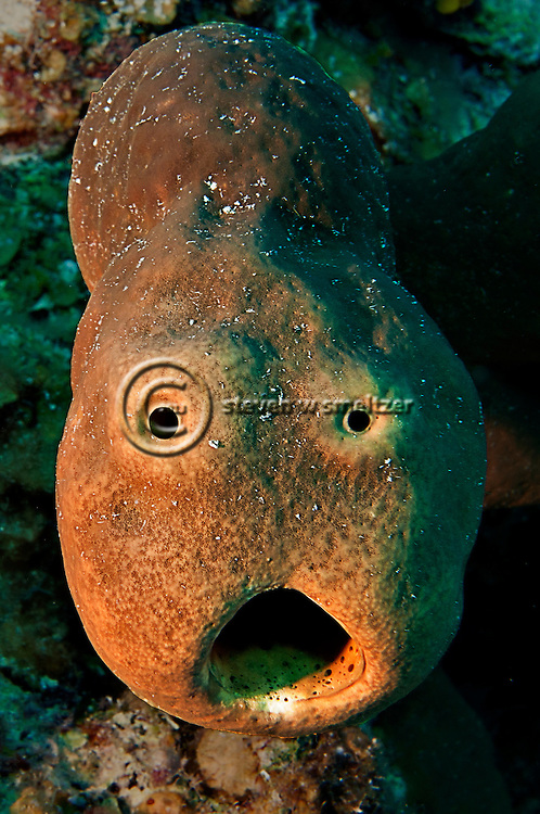 Yikes, Surprised Brown Tube Sponge, Grand Cayman