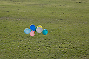 At the beginning of the fourth week of the UK government's lockdown during the Coronavirus pandemic, and with 120,067 UK reported cases with 16,060 deaths, balloons snagged against a nearby tree flot in an afternoon breeze in Ruskin Park, a green space in Lambeth, South London, on 20th April 2020, in London, England.