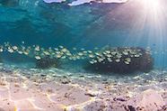 Guam - Tumon and Piti Bay Marine Preserves