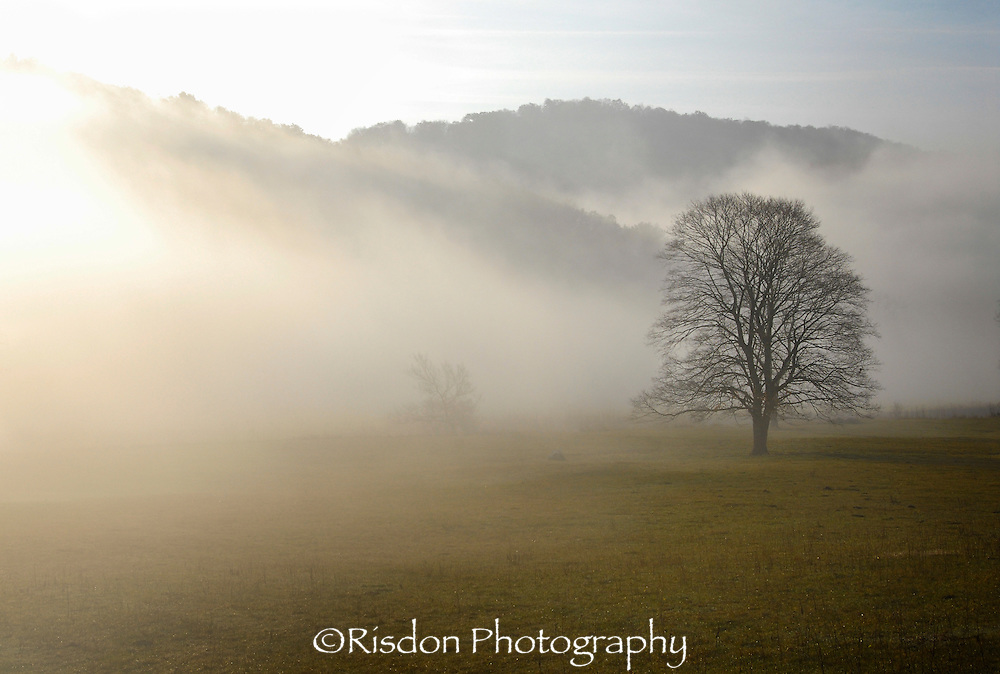Bare tree in field with fog