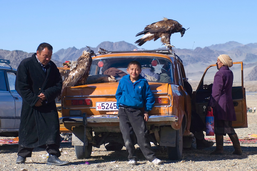 Golden Eagles rest on a spectators car at the annual eagle hunting festival.