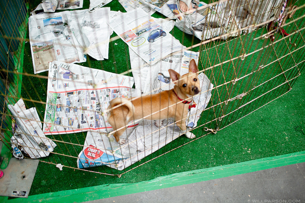 A dog available for adoption.