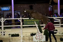 095 - Indifix D Z <br /> Hengsten keuring BWP - Koningshooikt 2017<br /> © Dirk Caremans<br /> 27/12/2016