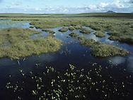 Flow Country (Moorland/Floating Bog) Scotland, UK