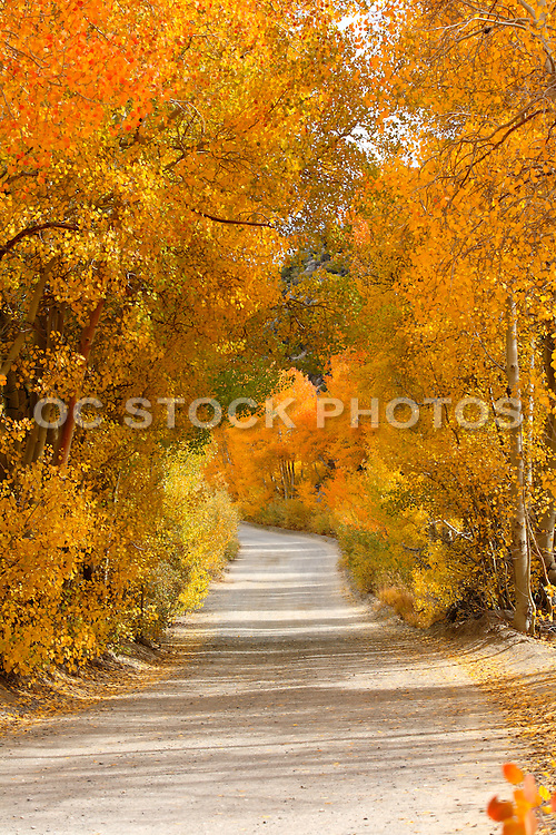 Dirt Road Through The Trees