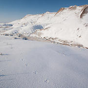 Hare print in snow, Badlands National Park, South Dakota, USA.