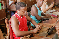 People making cigars at the Partagas cigar factory; Havana Cuba,