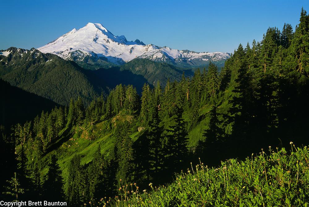 Mt. Baker from Winchester Mountain, Summer, Green