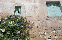 Low angle view of stone wall house with flower plant growing in foreground