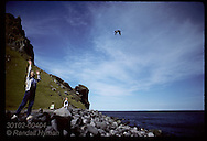 Girl tosses puffin chick into air, releasing it to sea after rescuing it nite before; Heimaey Iceland