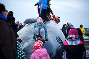 Children of the Barrow community slide down and play on the second whale caught in this year's fall whaling season in Barrow, AK on September 22, 2014.