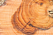 Close up a section through a pine tree trunk This shows marked growth rings. Visible rings appear as a result of the changing growth rate through the seasons, so each ring equates to one year of growth. The use of patterns of growth rings as an aid to dating a sample is called dendrochronology.